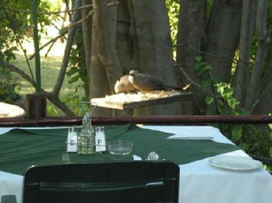 Sedia Riverside Hotel : breakfest view