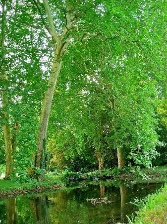 Acquigny, Francia: les platanes se reflétant dans les rivières