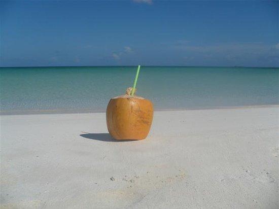 Cayo Ensenachos, Cuba: coconut