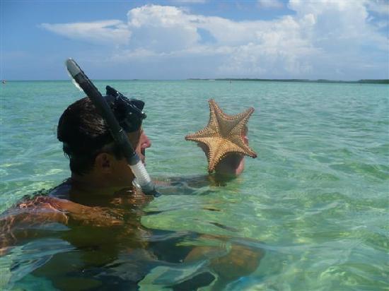 Iberostar Ensenachos : starfish my husband found