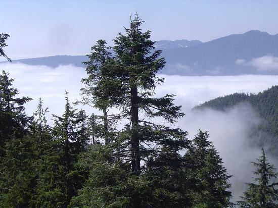 Vancouver, Kanada: On top of the clouds at Grouse Mountain