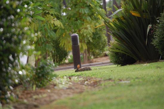 Monte da Quinta Resort: Umcoelho selvagem no jardim em frente ao quarto