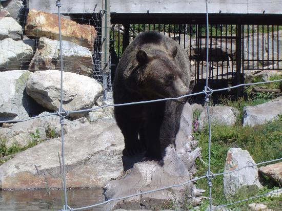 Vancouver, Canadá: Meet the Grizzlies