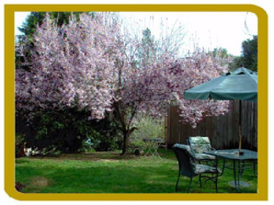The Cottage At Perry Creek: Lovely private back yard with BBQ and lounge seating