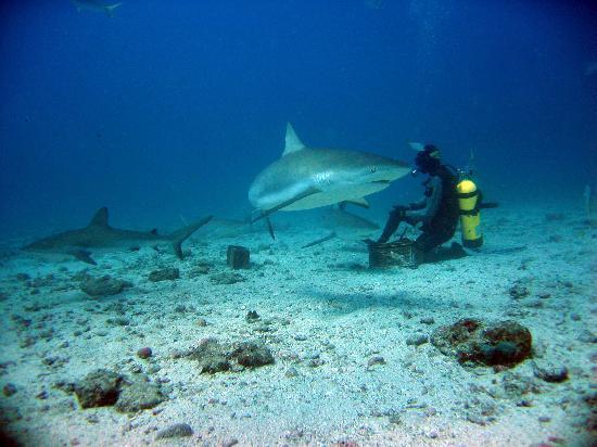 Ocean Explorers Dive Center: Ocean Explorers Shark Dive