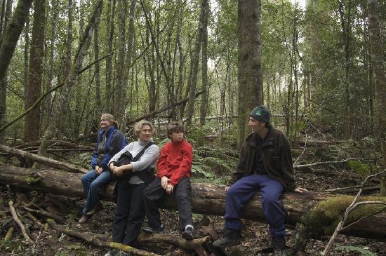 فوريست ووكس لودج: forest walk
