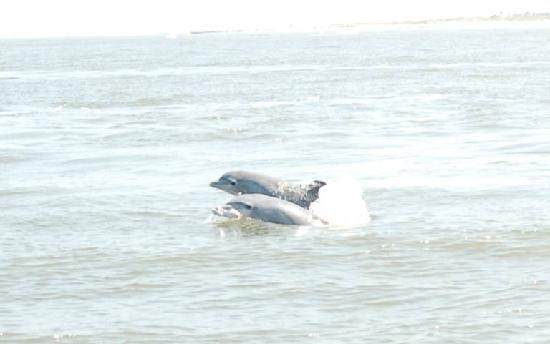 Captain Mike's Dolphin Tours: A pair of dolphins!