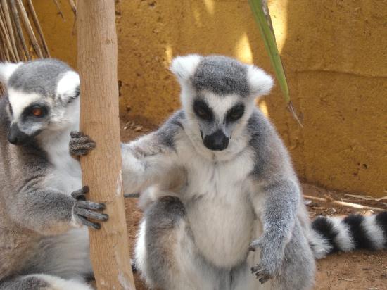 Marino Tenerife : Monkey Park
