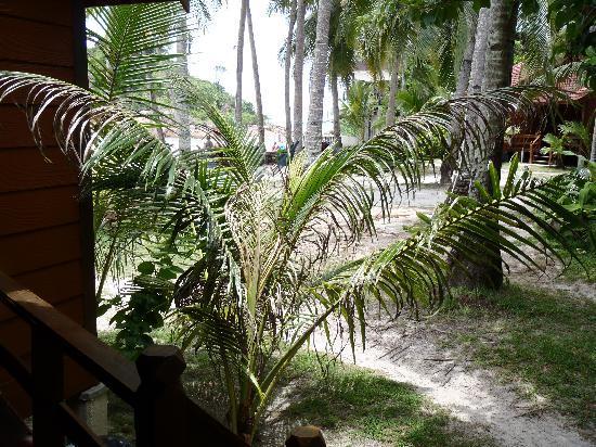 Ayumayang Redang Island Resort : Seeview