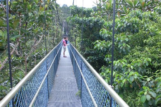 Hsbc Treetop Walk Picture Of Macritchie Nature Trail