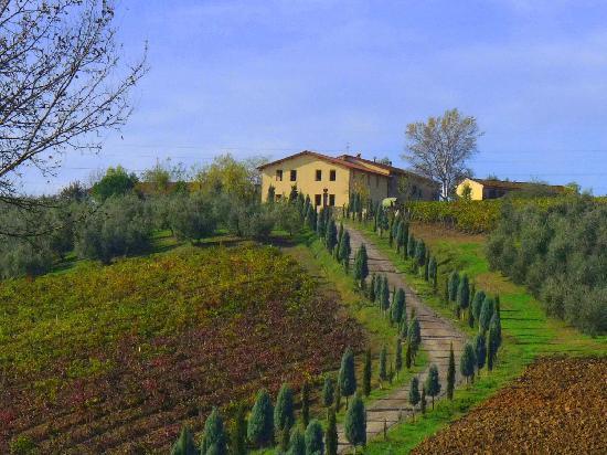 ทัสกานี, อิตาลี: Vinci