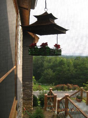 Three Pines View: Waiting for hummingbirds during breakfast