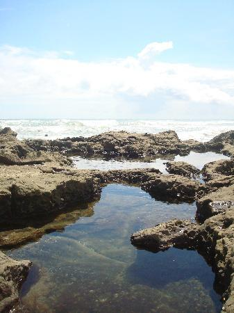 Hotel Raratonga: The tidal pools nearby where my favorite part of the trip