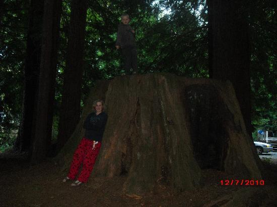 KOA Campground Crescent City: Majestic old redwood stump in KOA Crescent City Kampground