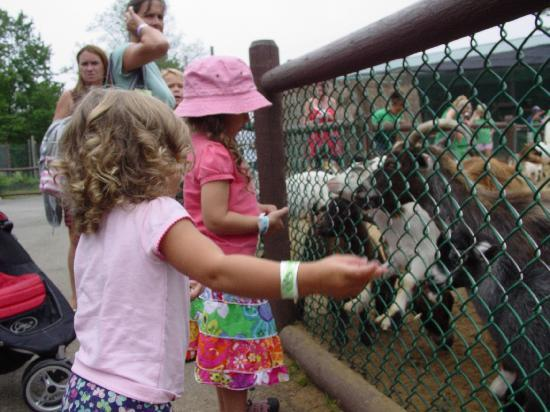 York's Wild Kingdom Zoo and Fun Park: my kids feeding the animals