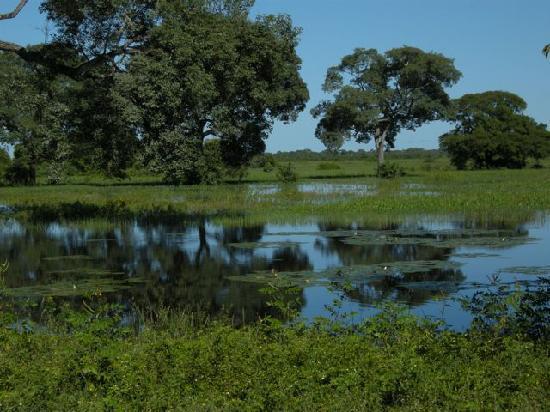 Fazenda Pouso Alegre: view on the way in
