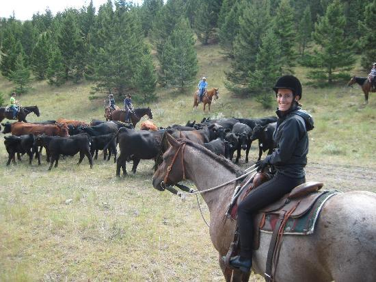 Rocking Z Guest Ranch: Cow hearding in the hills!