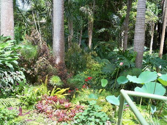 Hunte's Gardens: hunte gardens