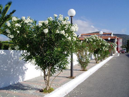 Zefiros Beach Hotel: Oleanders