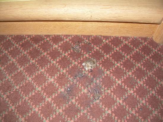 Garrett's Desert Inn : Carpet by my bed