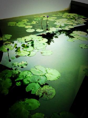 The Houben Hotel ( Adult Only ): d lovely lilly pond at the pavilion