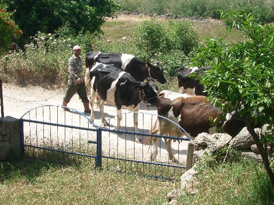 Selene's Pension: village life at Bafa lake