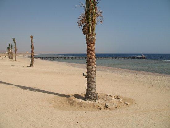 Paradise Beach Resort: Spiaggia palme