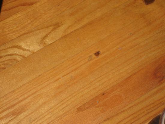 The Secret Garden Bed and Breakfast: dead bugs on the floor