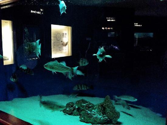 Calvert Marine Museum and Drum Point Lighthouse: Fish