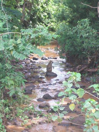 Ndarakwai Ranch Camp: Baboon in the stream.