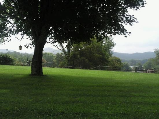 Abingdon, VA: read a book under this tree listening to the birds - beautiful country view