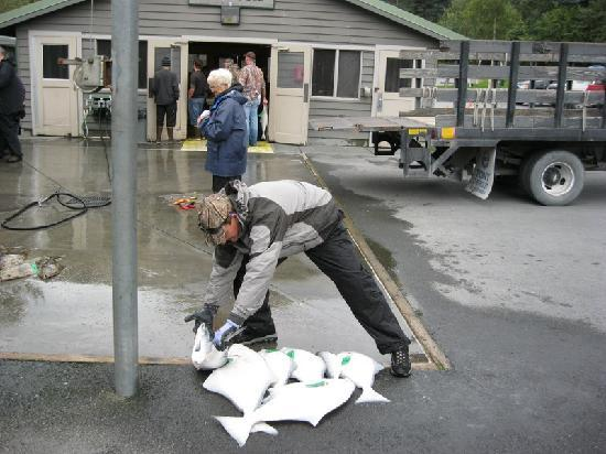 Seward Military Resort: Halibut - chickens are better than barn doors