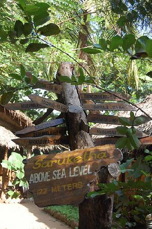 Kurunegala, ศรีลังกา: The information tree