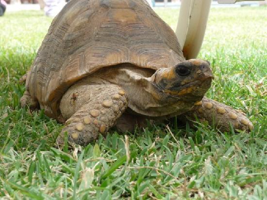 Casa de Avila - For Travellers : la petite tortue du patio