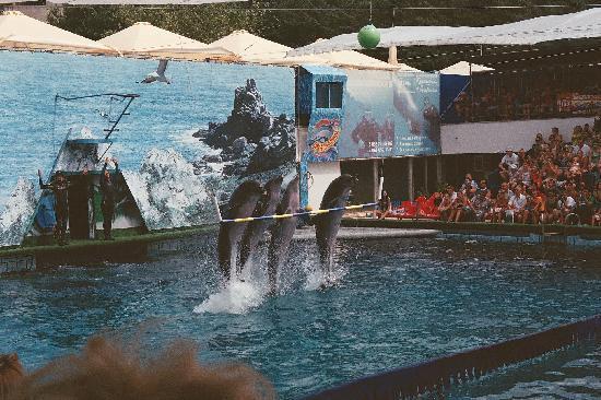 Yalta Intourist Hotel: show dolphinarium à l'américaine - gratuit