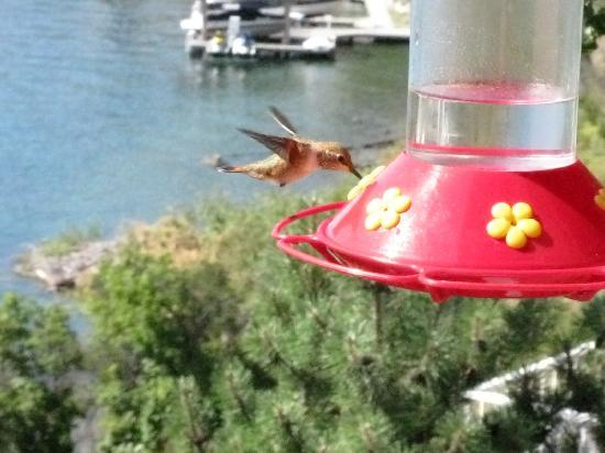 Willow Beach Bed and Breakfast: Hummingbirds on the breakfast deck