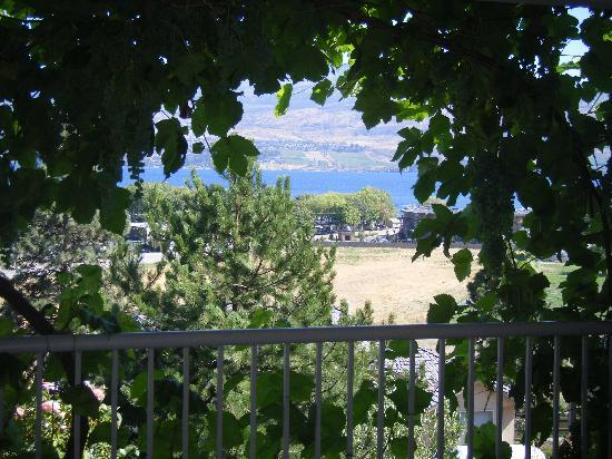 Bedsyde Manor: the view and the grape vines