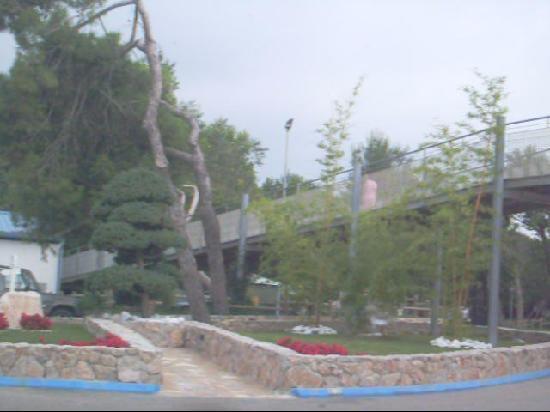 Camping Village Pino Mare: entrata campeggio