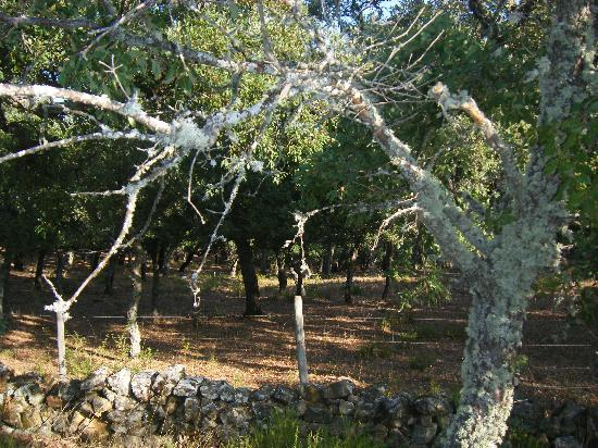 Andalucian Cycling Experience Day Trips: The cork forest on the way to Grazelema