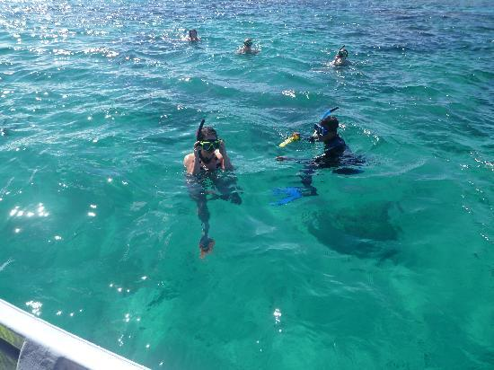 ‪سافوسافو, فيجي: My Colleagues Snorkelling with the Marine Biologist Johnny‬