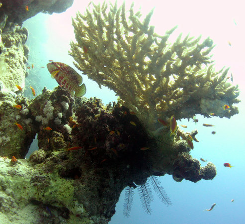 Dahab, Egipt: Typical Red Sea shot.