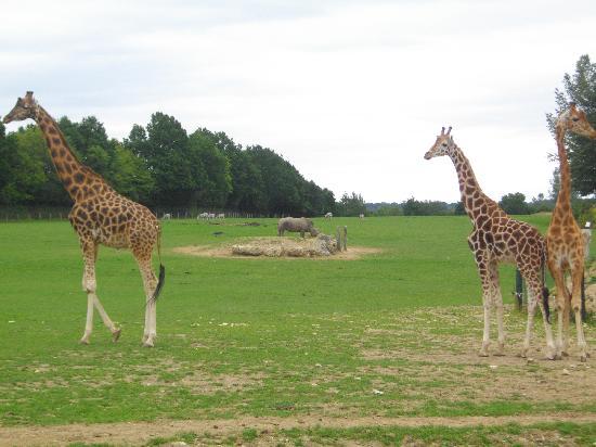 Cerza Safari Lodge : PARC