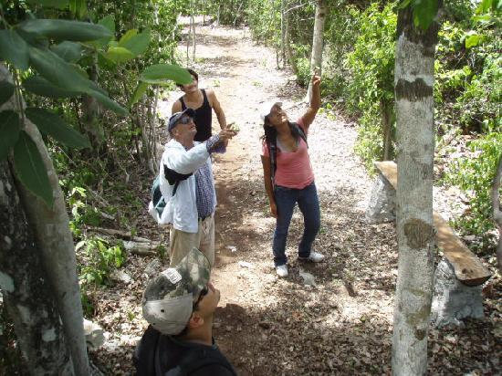 Villa Maya: Jungel hike