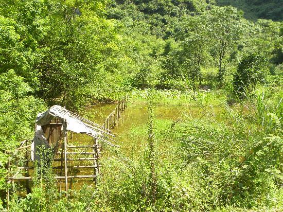 Dragon River Retreat: Nice walk across the bridge