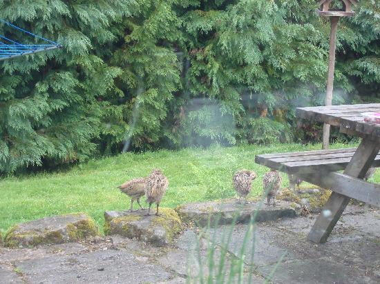 Coinachan Guest House: pheasants outside, view from the window