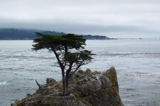 Hampton Inn Santa Cruz: The Lone Cypress, Seventeen Mile Drive