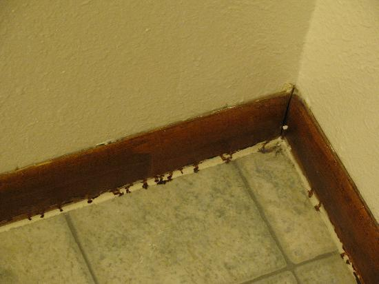 Econo Lodge: Bathroom Floor - Gross