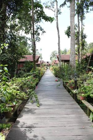 Abai Jungle Lodge: Boardwalk to the rooms