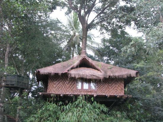 Kenichira, India: Tree top