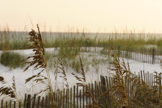 Silver Dunes Condominium: Dunes